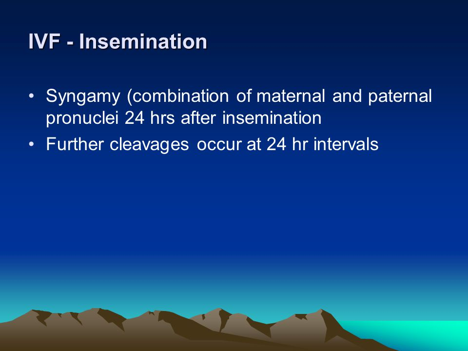 IVF - Insemination Syngamy (combination of maternal and paternal pronuclei 24 hrs after insemination.