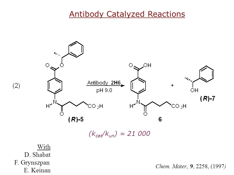Antibody Catalyzed Reactions