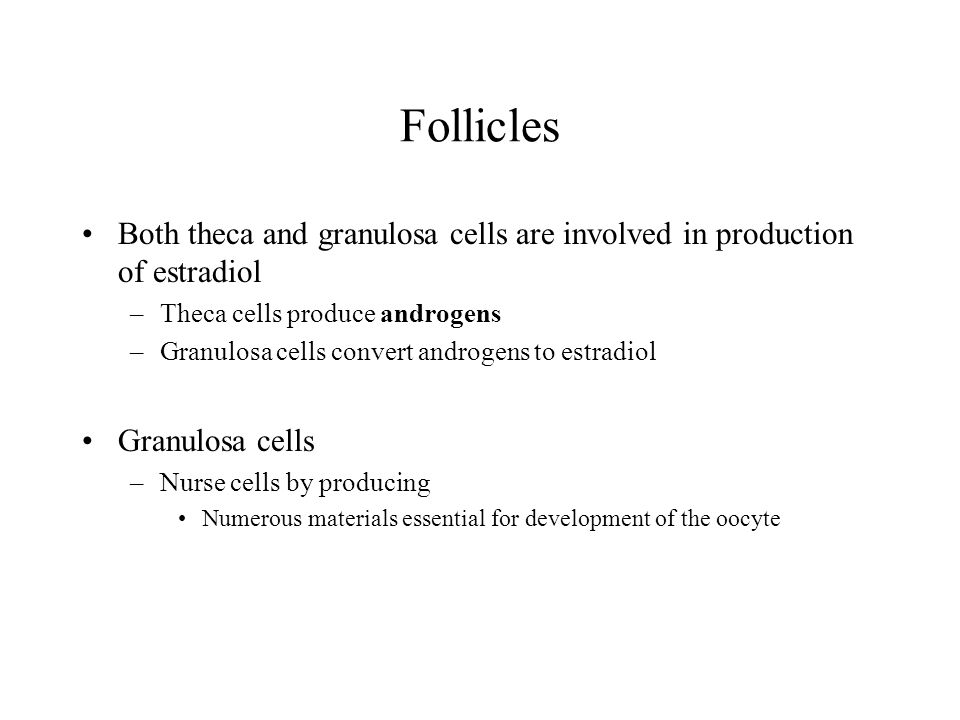 Follicles Both theca and granulosa cells are involved in production of estradiol. Theca cells produce androgens.