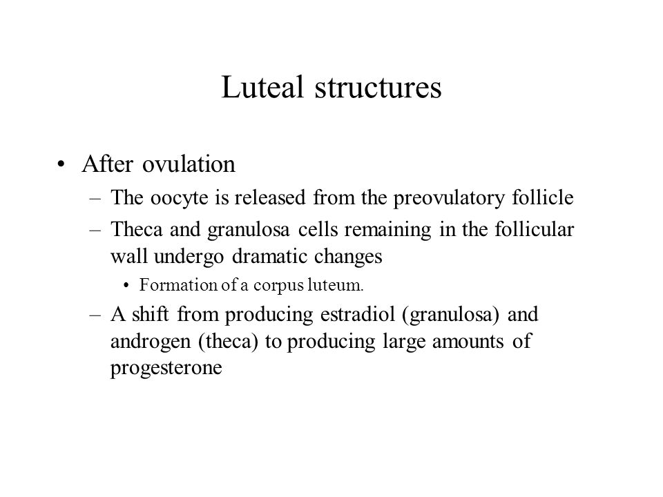 Luteal structures After ovulation