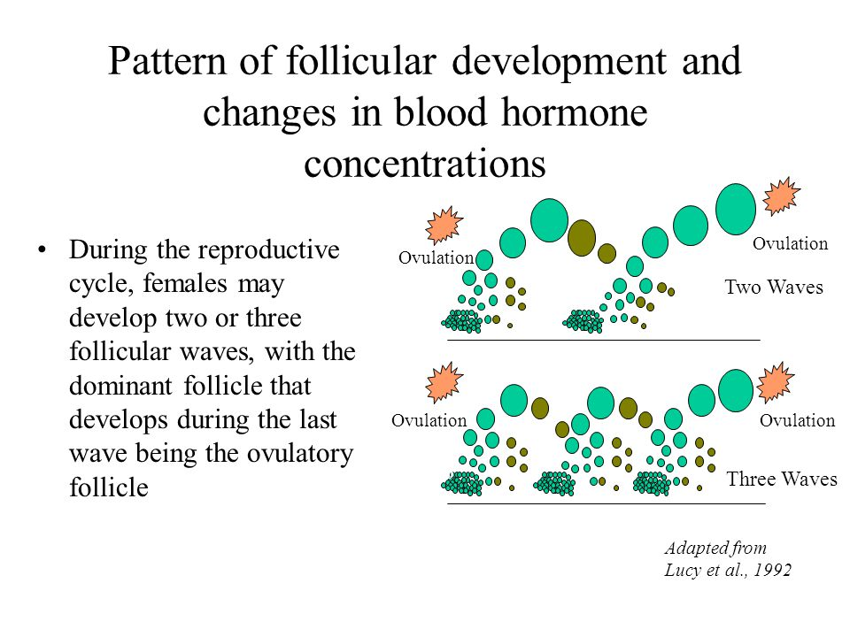 Pattern of follicular development and changes in blood hormone concentrations