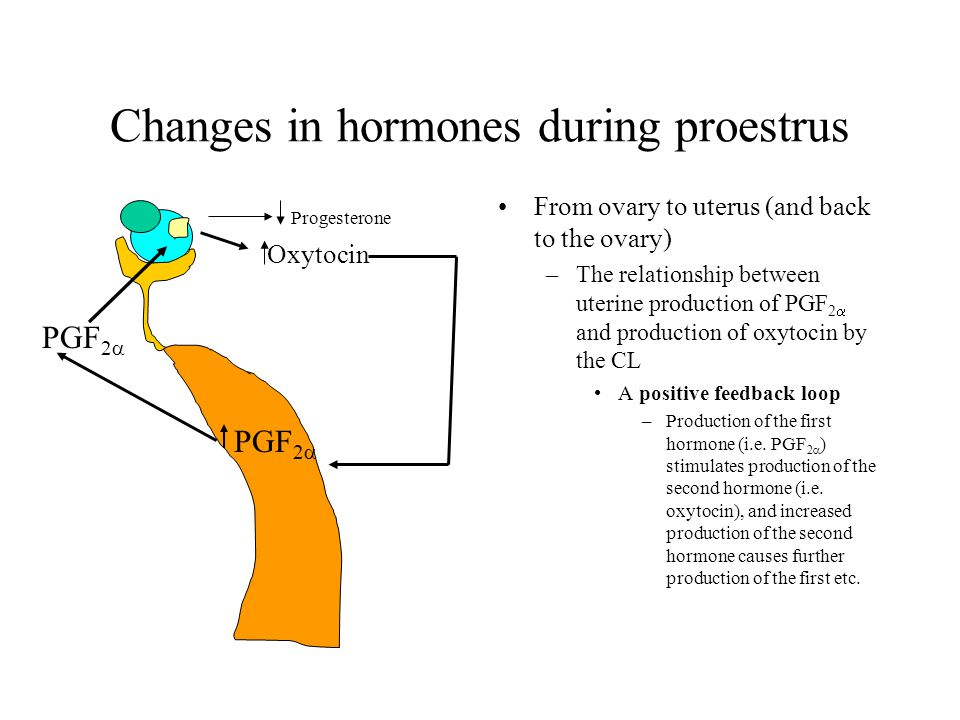 Changes in hormones during proestrus
