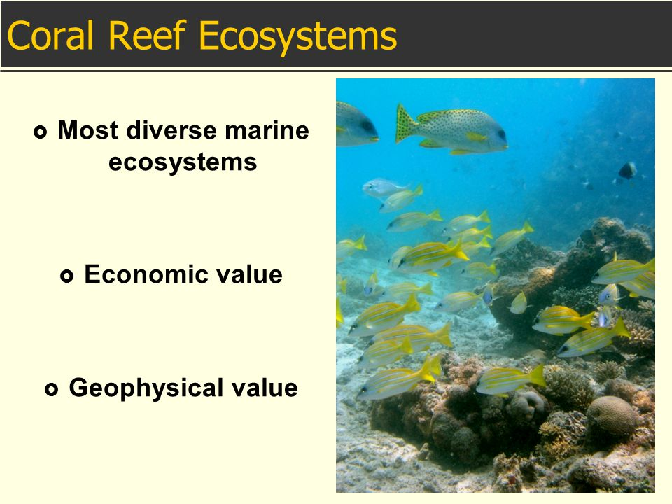 Most diverse marine ecosystems
