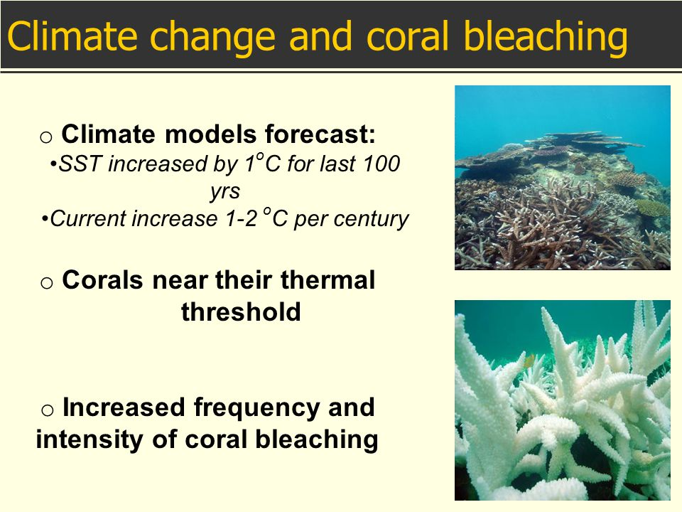 Climate change and coral bleaching