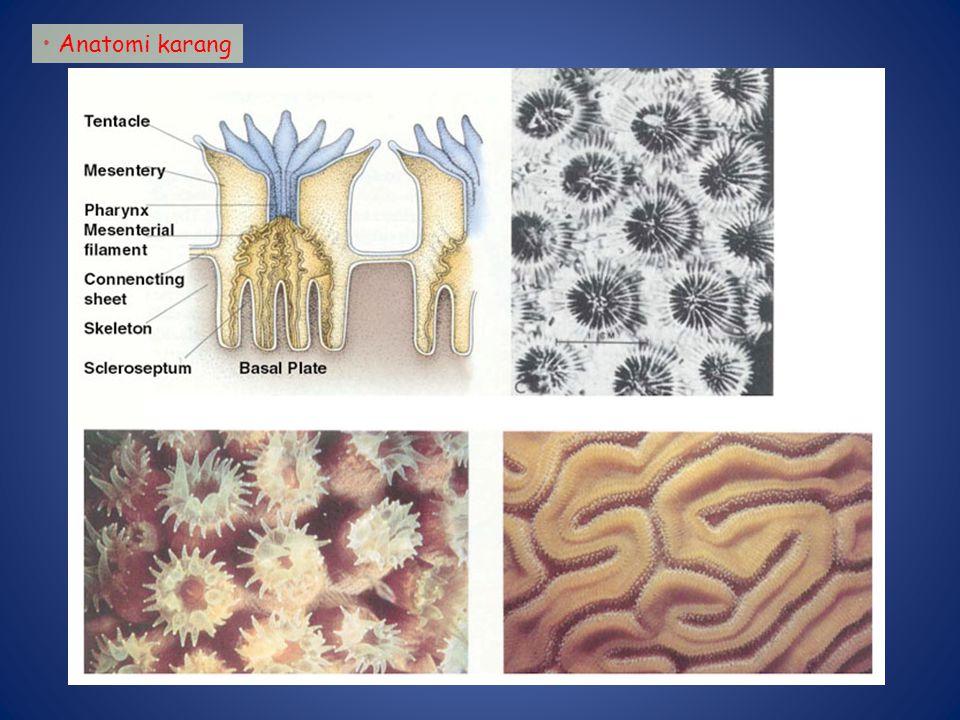 Anatomi karang