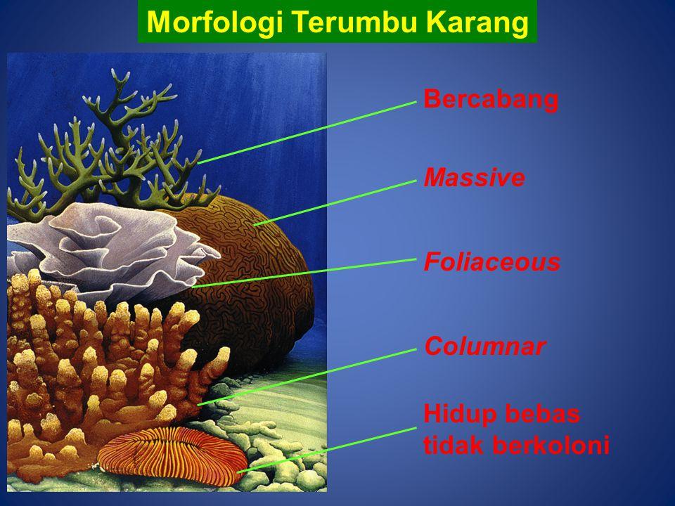 Morfologi Terumbu Karang