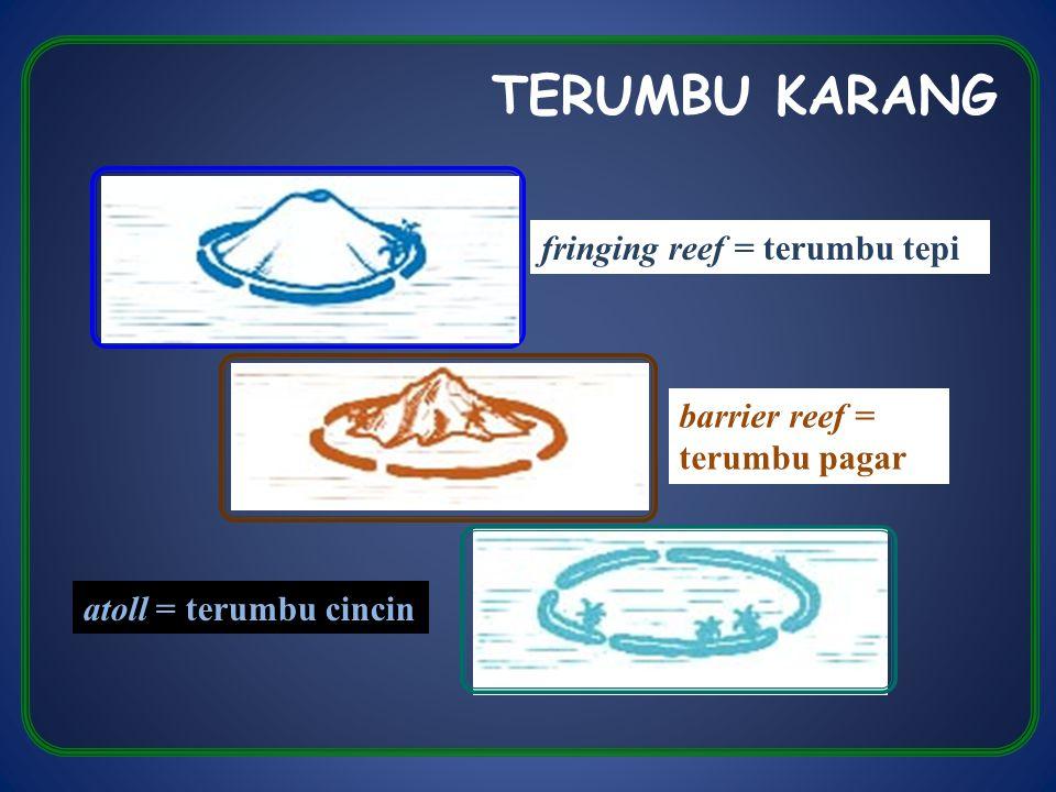 TERUMBU KARANG fringing reef = terumbu tepi