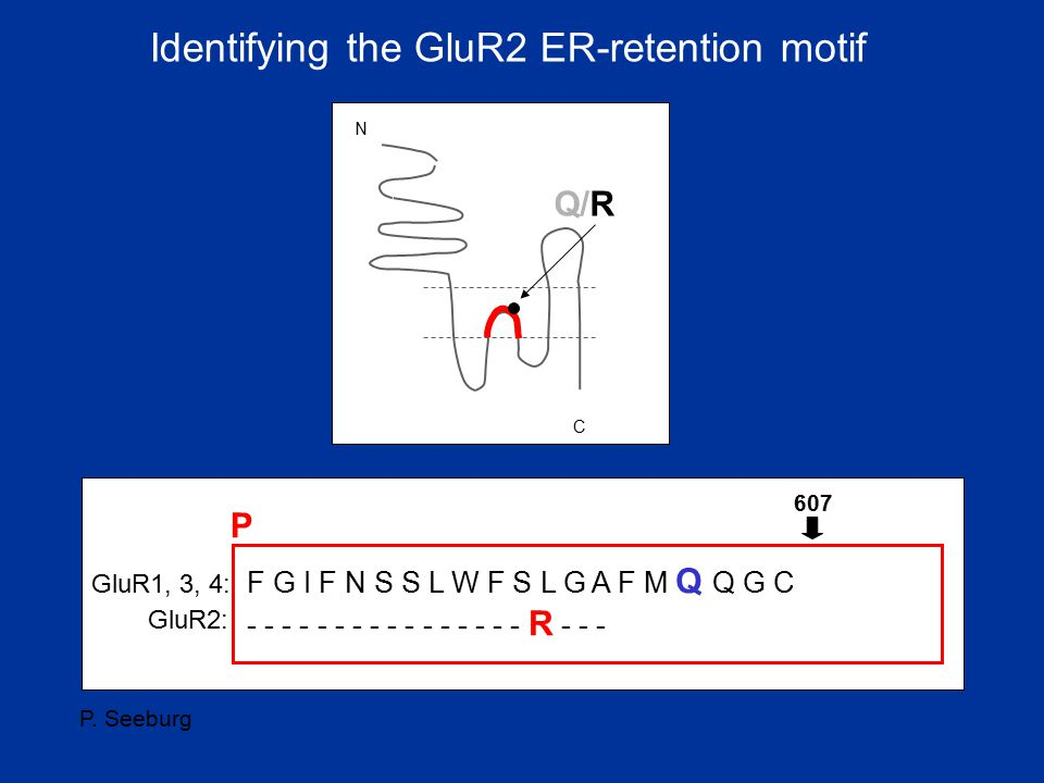 Identifying the GluR2 ER-retention motif
