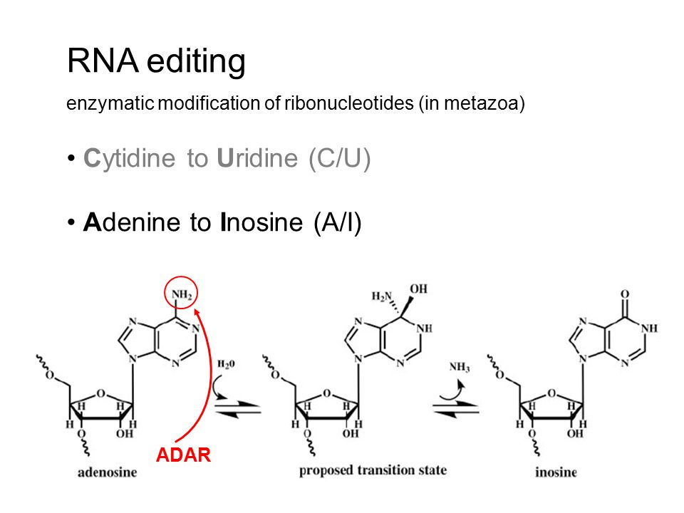RNA editing Cytidine to Uridine (C/U) Adenine to Inosine (A/I)