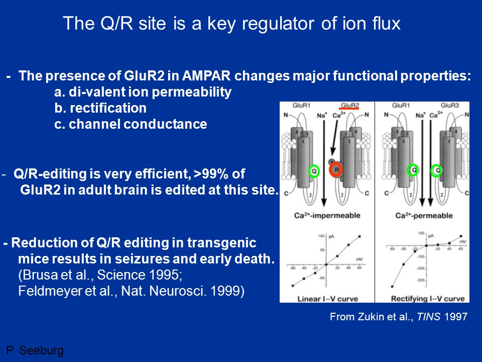 The Q/R site is a key regulator of ion flux