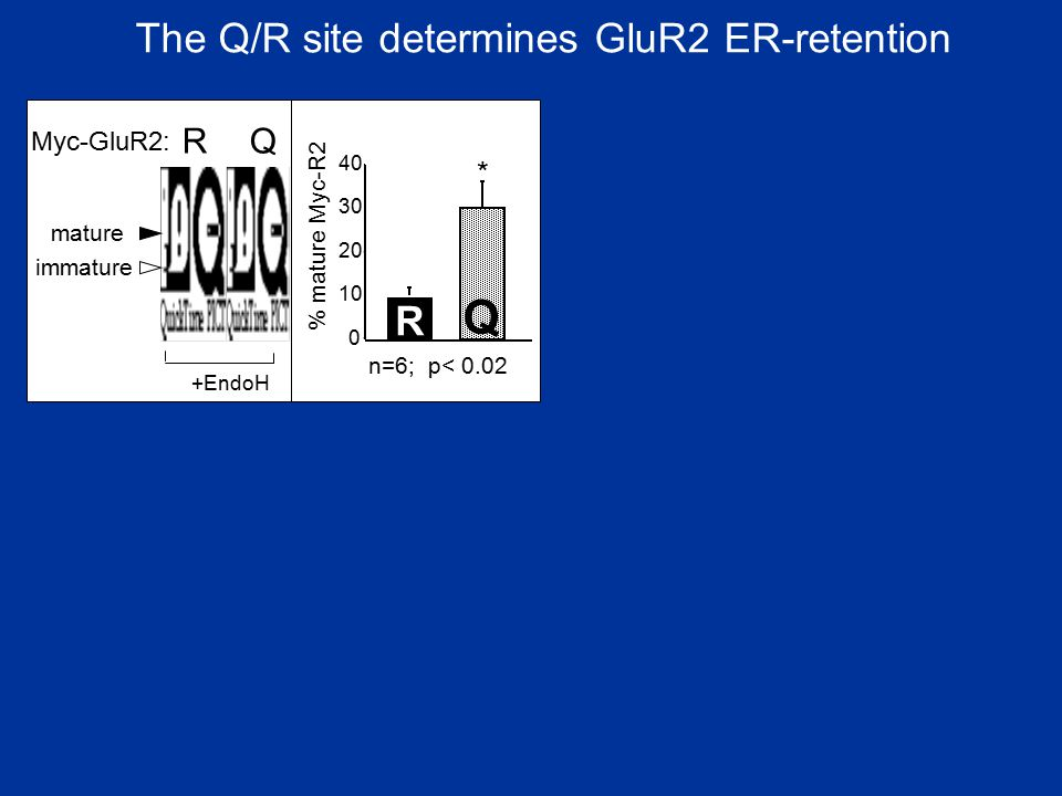 The Q/R site determines GluR2 ER-retention