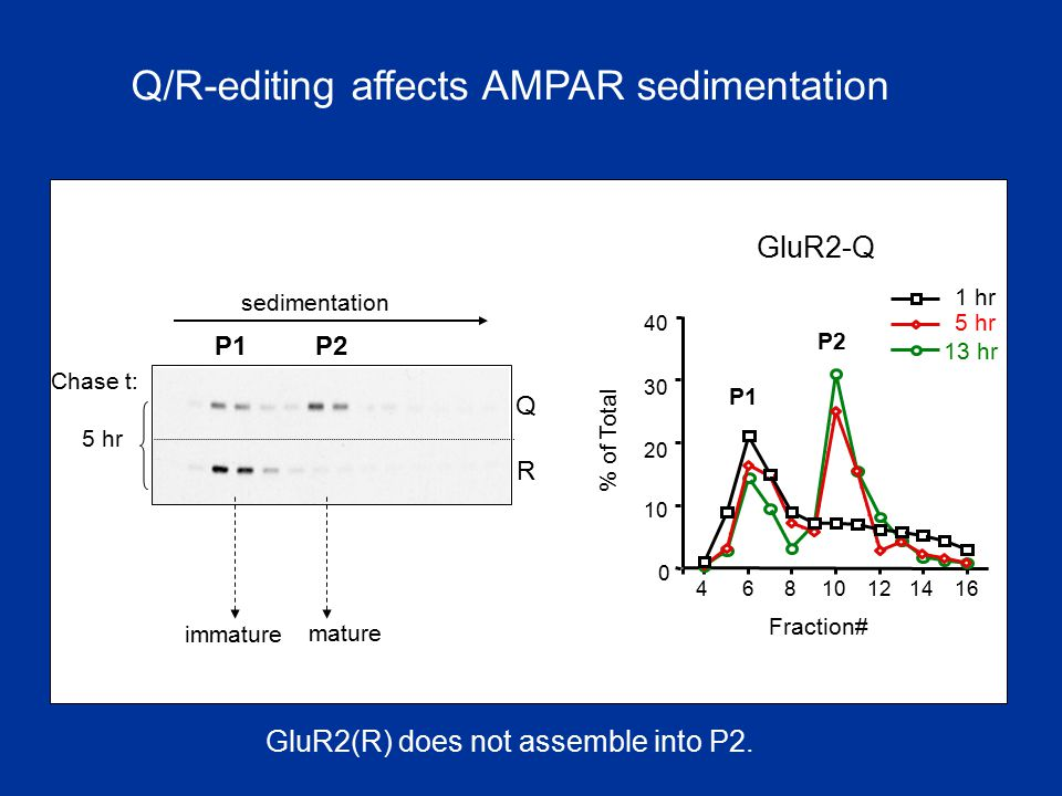 Q/R-editing affects AMPAR sedimentation