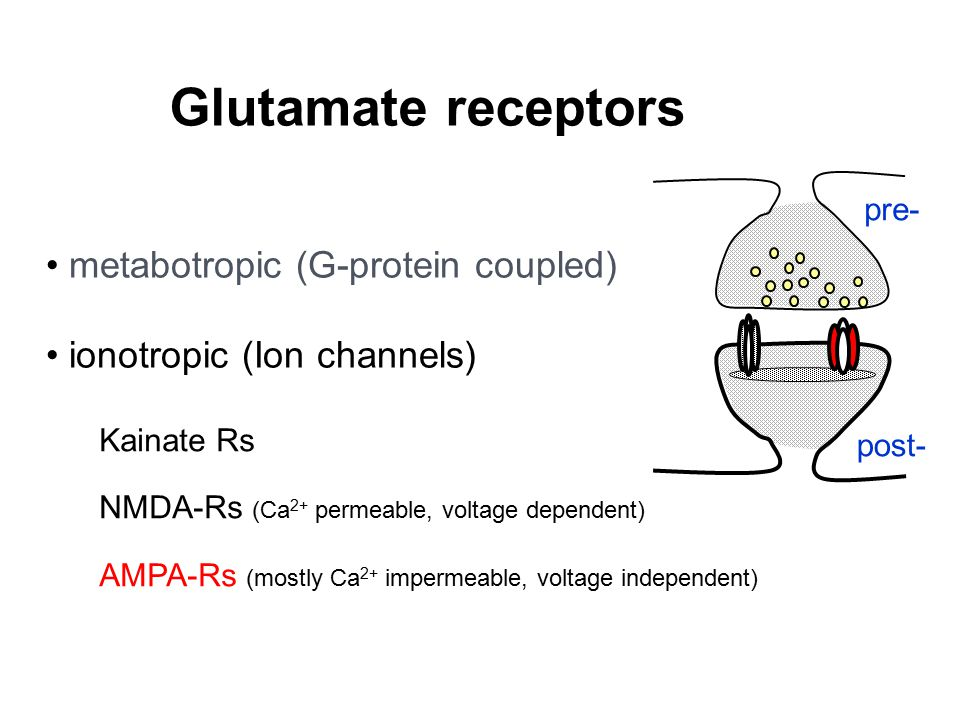Glutamate receptors metabotropic (G-protein coupled)
