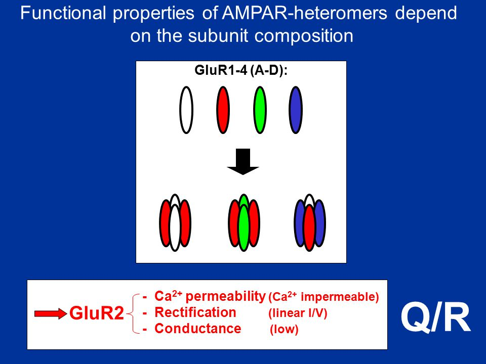 Q/R Functional properties of AMPAR-heteromers depend