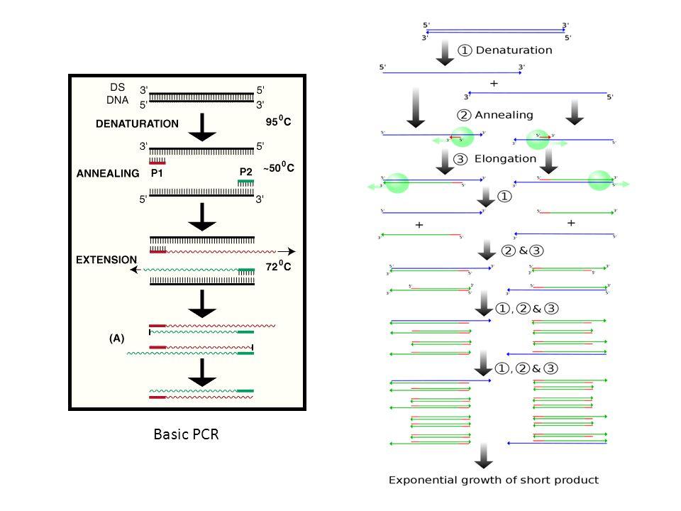 Basic PCR