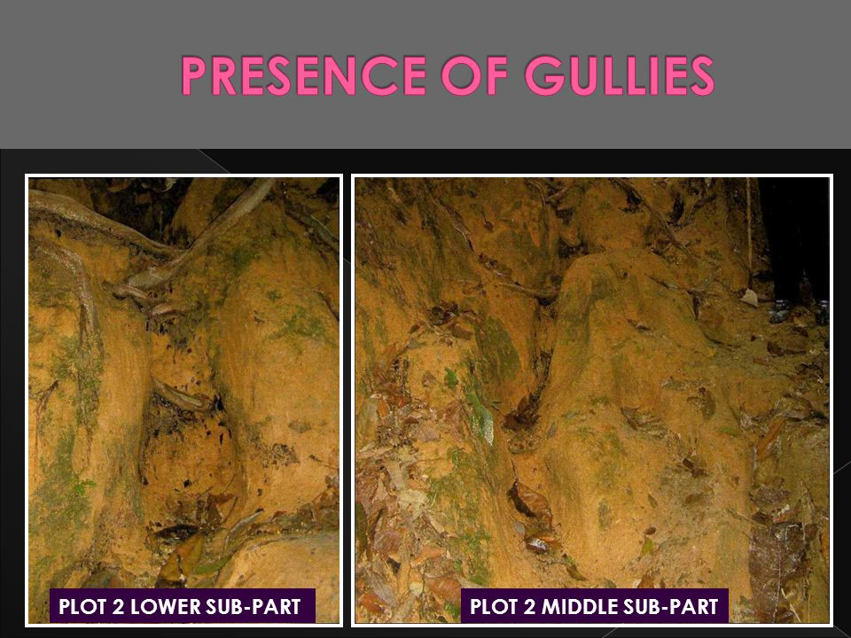 PRESENCE OF GULLIES PLOT 2 LOWER SUB-PART PLOT 2 MIDDLE SUB-PART
