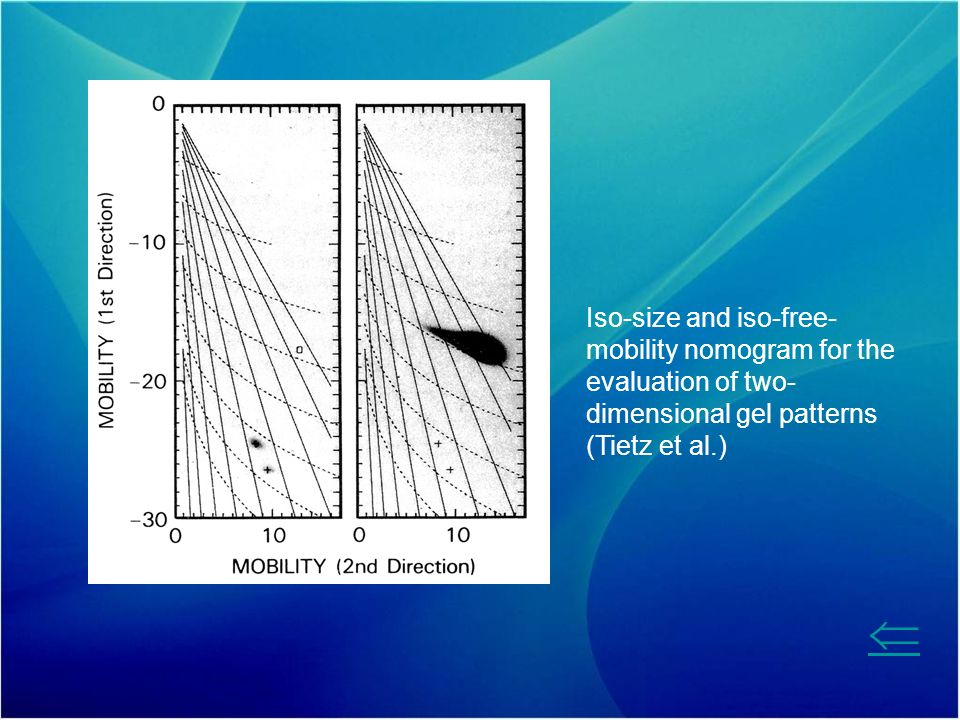 Iso-size and iso-free-mobility nomogram for the evaluation of two-dimensional gel patterns