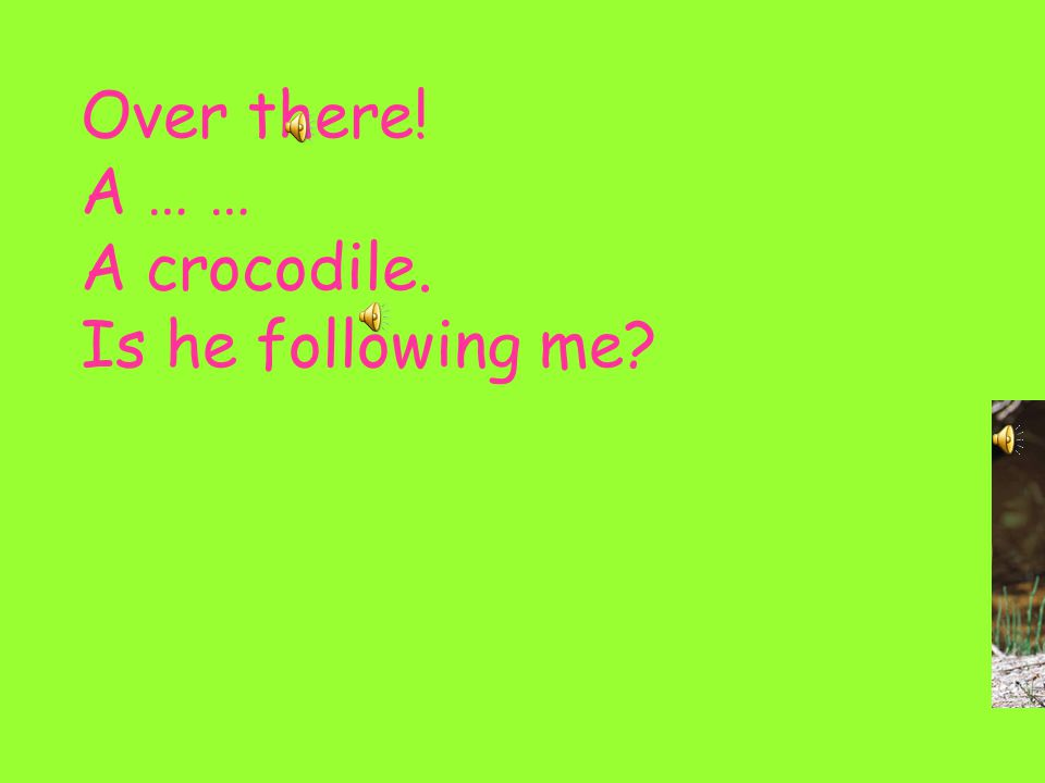 Over there! A … … A crocodile. Is he following me