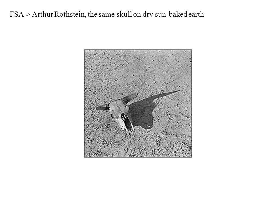 FSA > Arthur Rothstein, the same skull on dry sun-baked earth