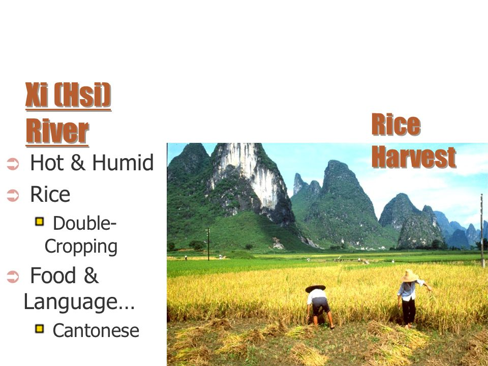 Xi (Hsi) River Rice Harvest Hot & Humid Rice Food & Language…