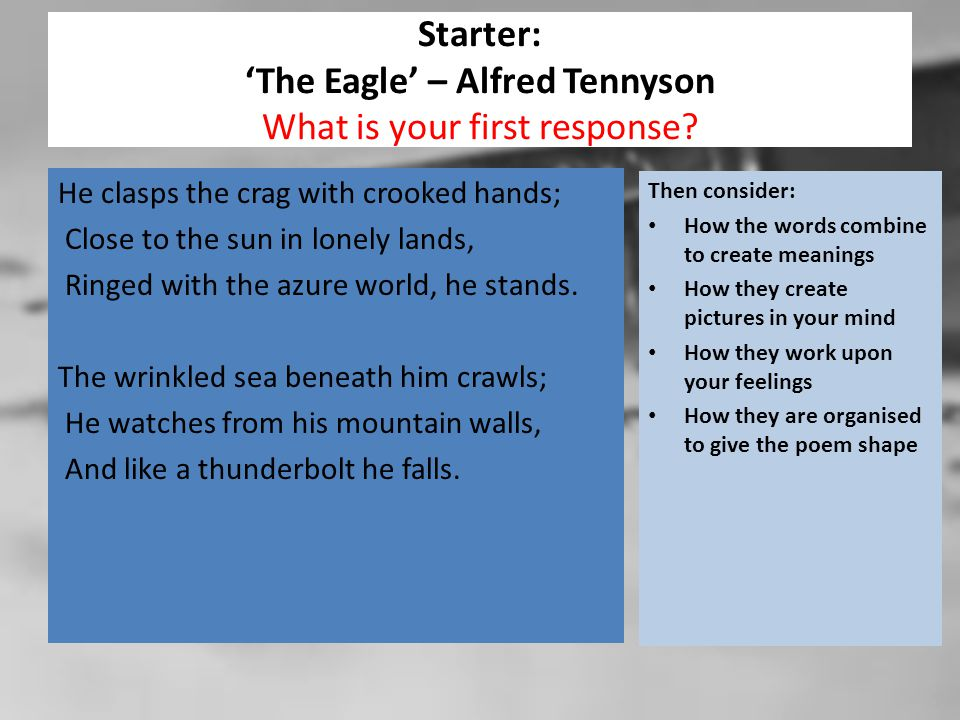 Starter: 'The Eagle' – Alfred Tennyson What is your first response