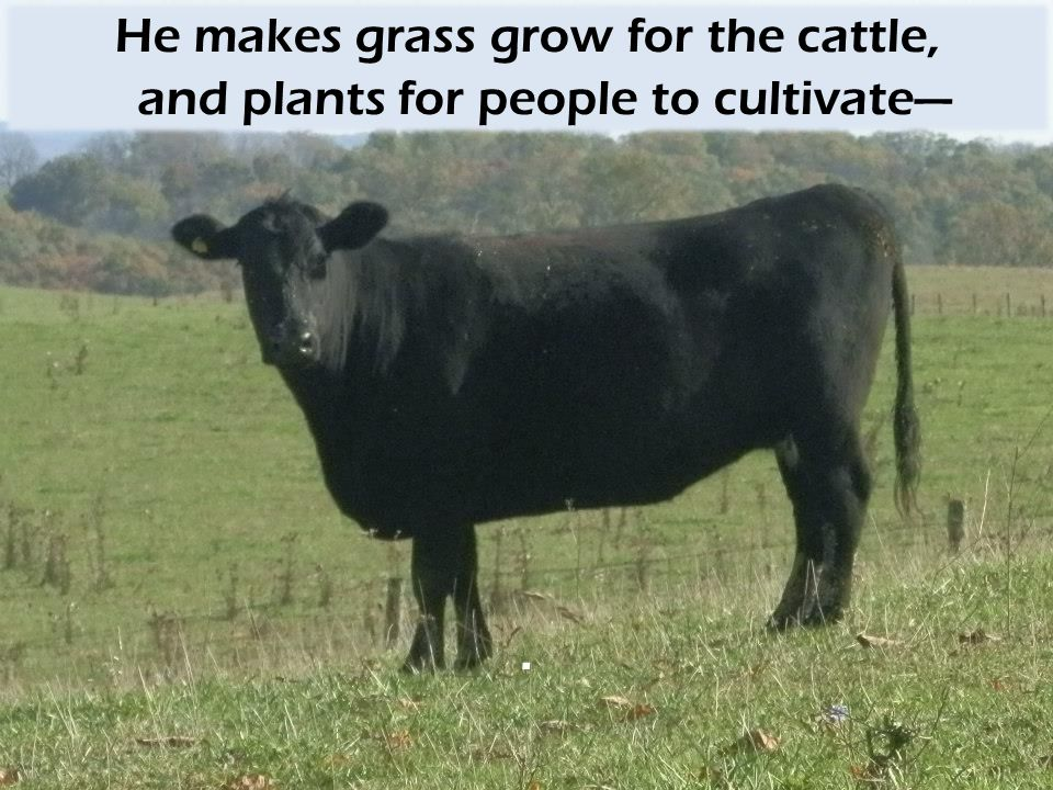 He makes grass grow for the cattle, and plants for people to cultivate—