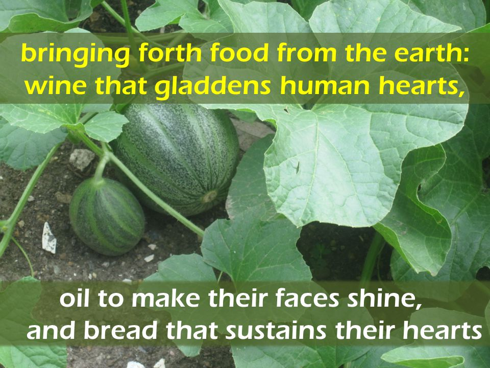 bringing forth food from the earth: wine that gladdens human hearts,