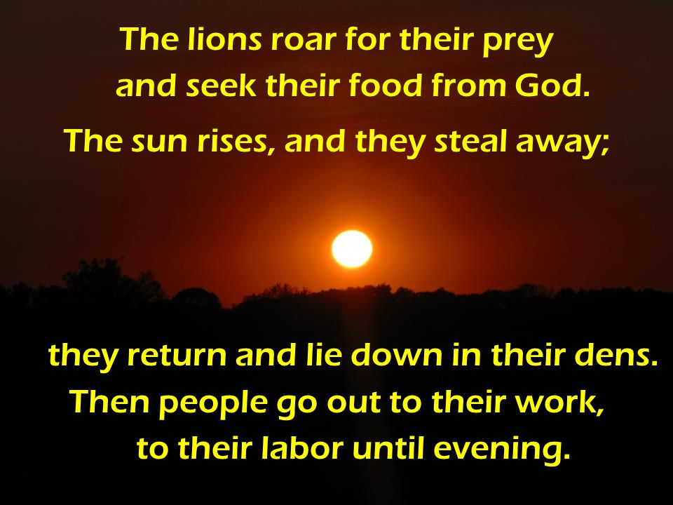 The lions roar for their prey and seek their food from God.