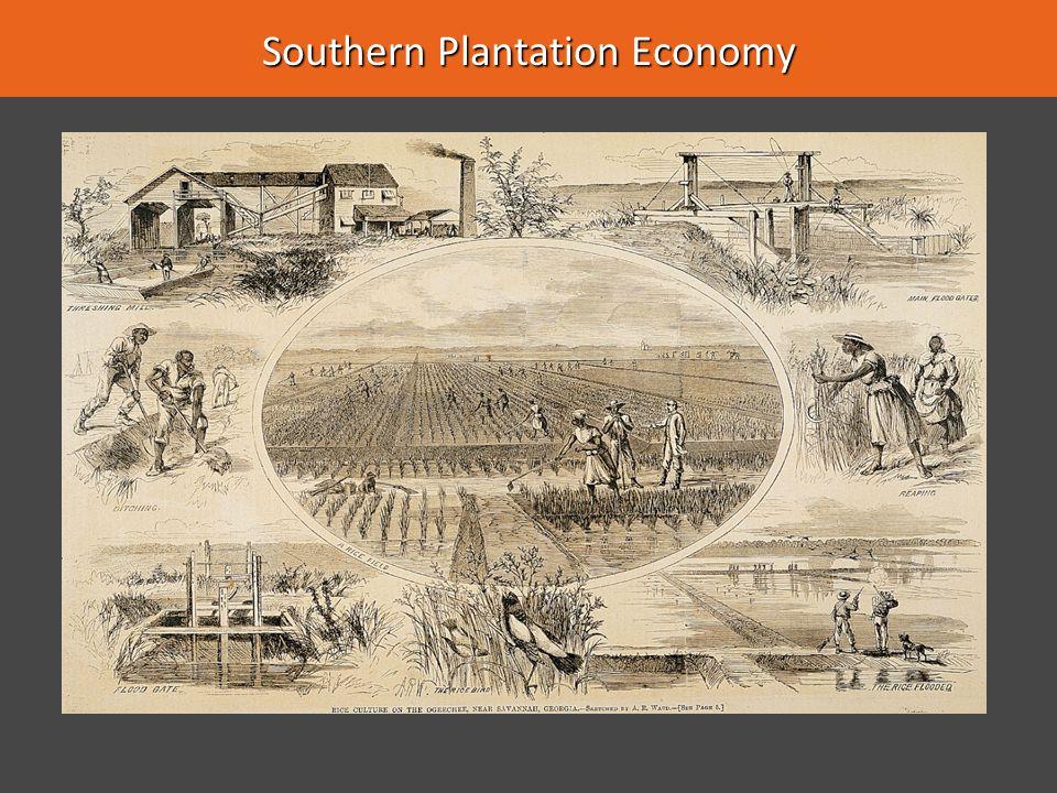 Southern Plantation Economy