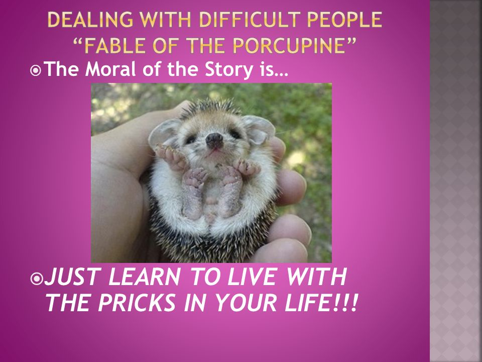 Dealing with difficult People Fable of the porcupine