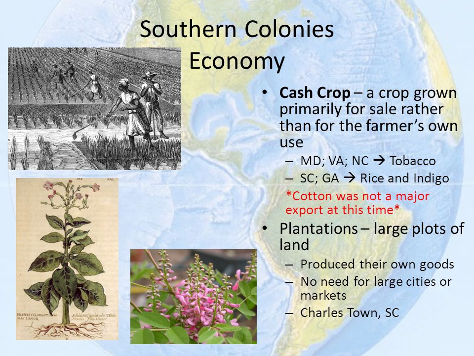 Southern Colonies Economy