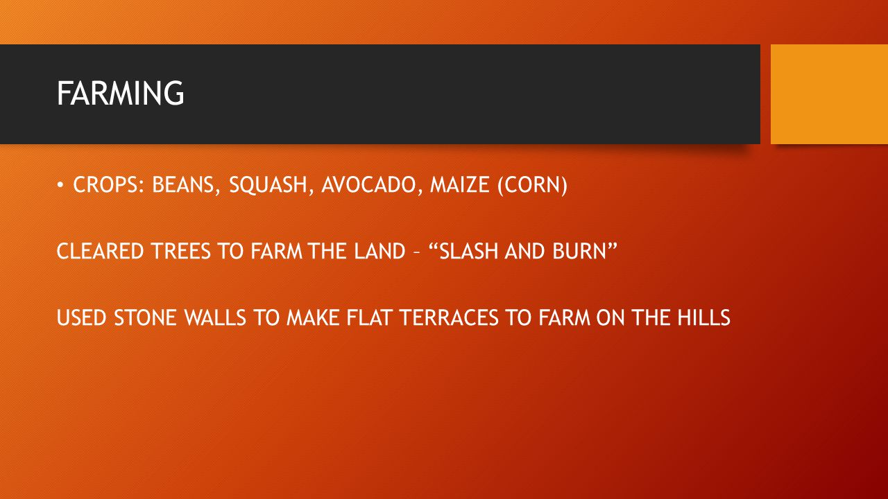 FARMING CROPS: BEANS, SQUASH, AVOCADO, MAIZE (CORN)