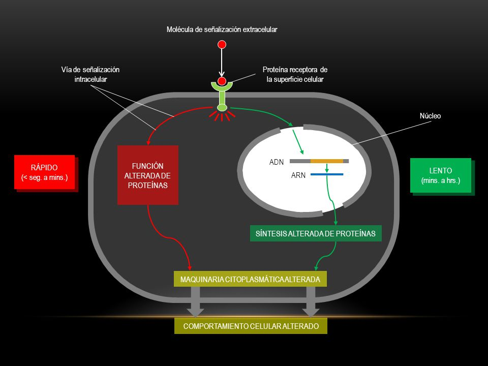 Molécula de señalización extracelular