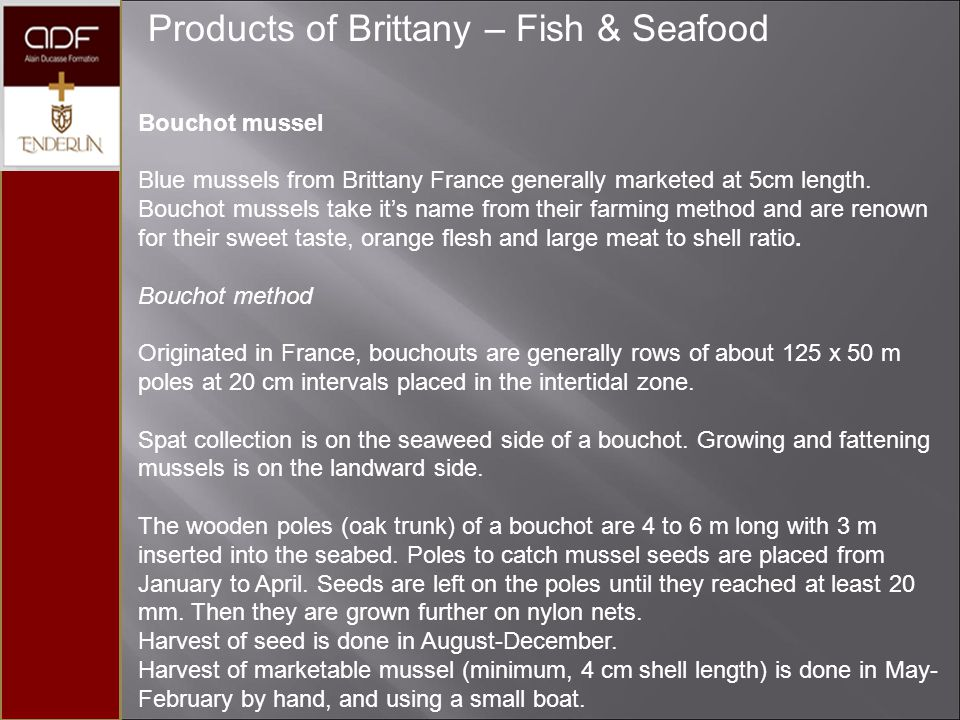Products of Brittany – Fish & Seafood