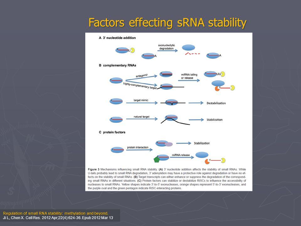 Factors effecting sRNA stability