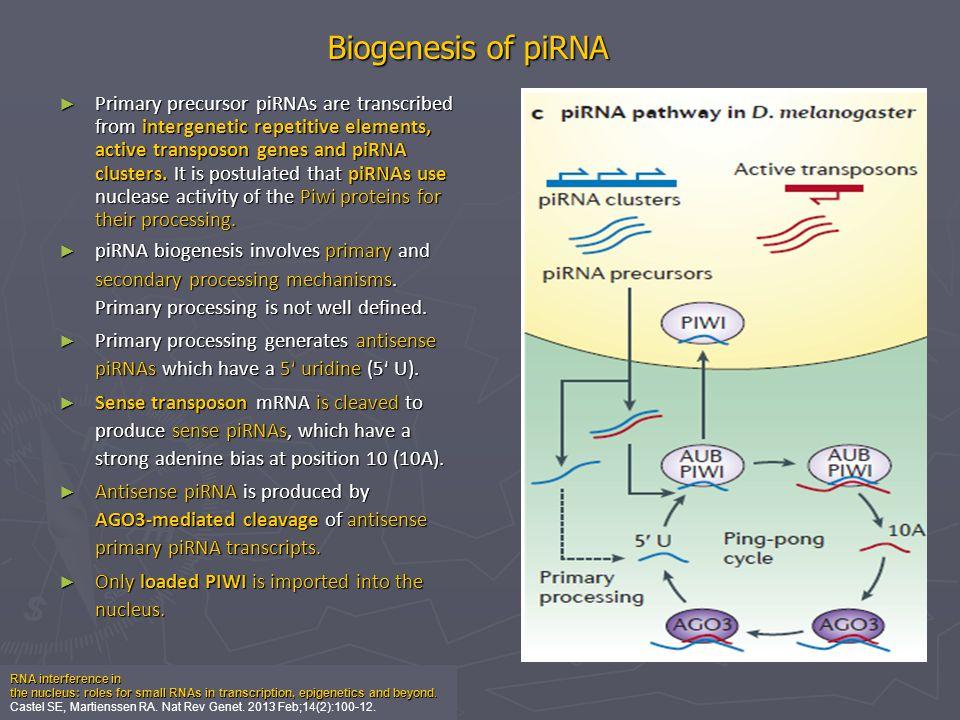 Biogenesis of piRNA