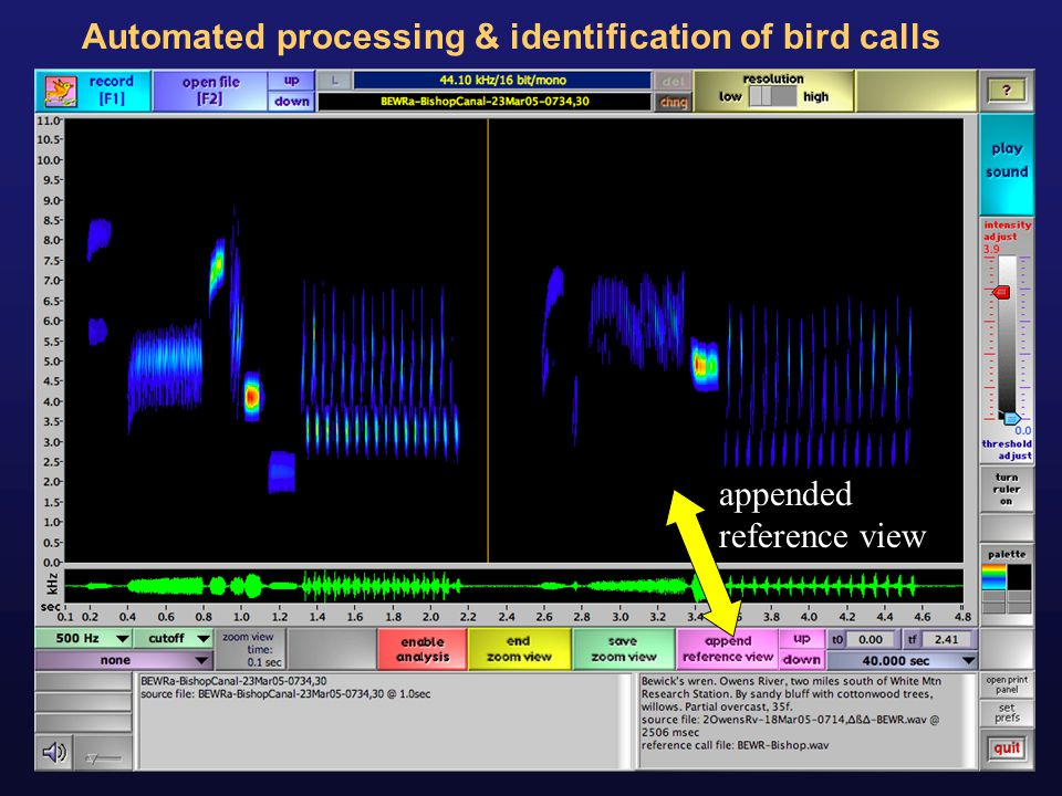 Automated processing & identification of bird calls
