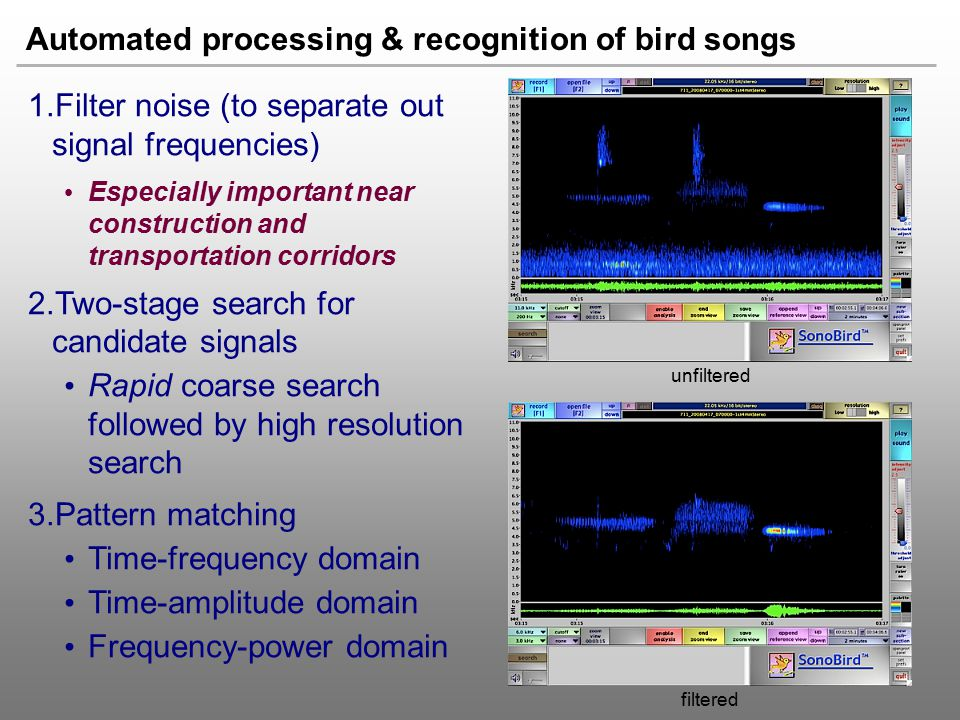 Automated processing & recognition of bird songs