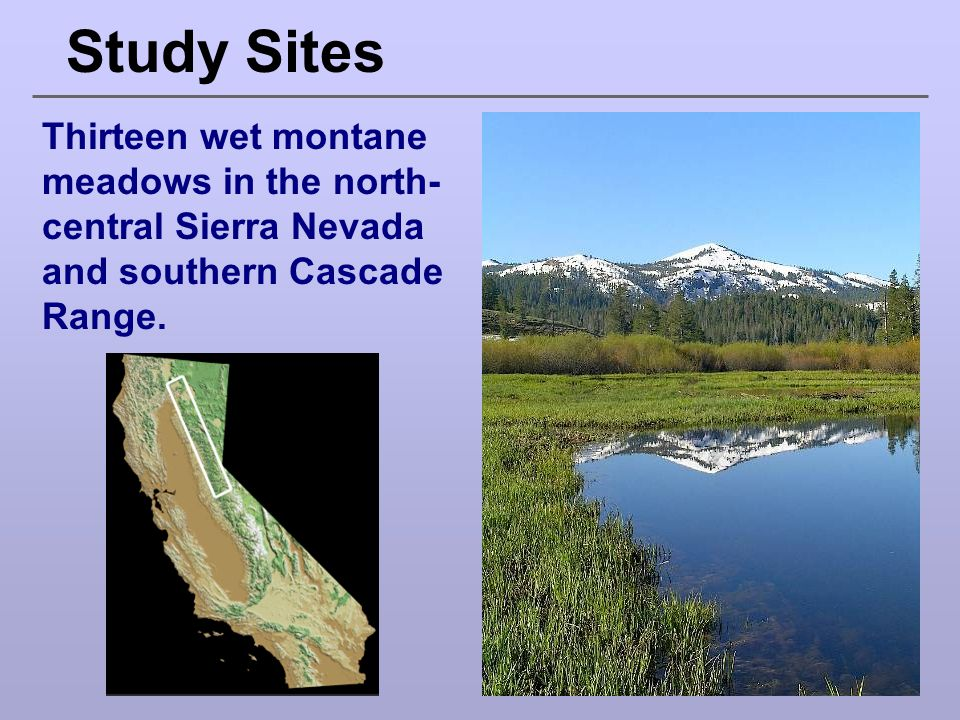 Study Sites Thirteen wet montane meadows in the north-central Sierra Nevada and southern Cascade Range.