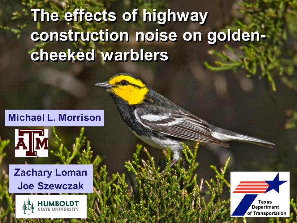 The effects of highway construction noise on golden-cheeked warblers