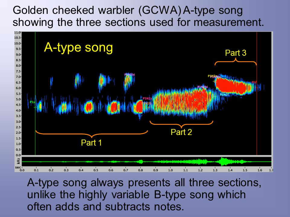 Golden cheeked warbler (GCWA) A-type song showing the three sections used for measurement.