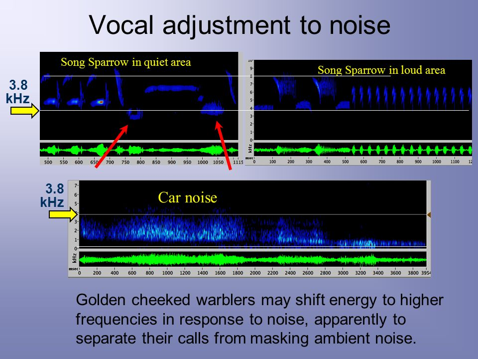 Vocal adjustment to noise