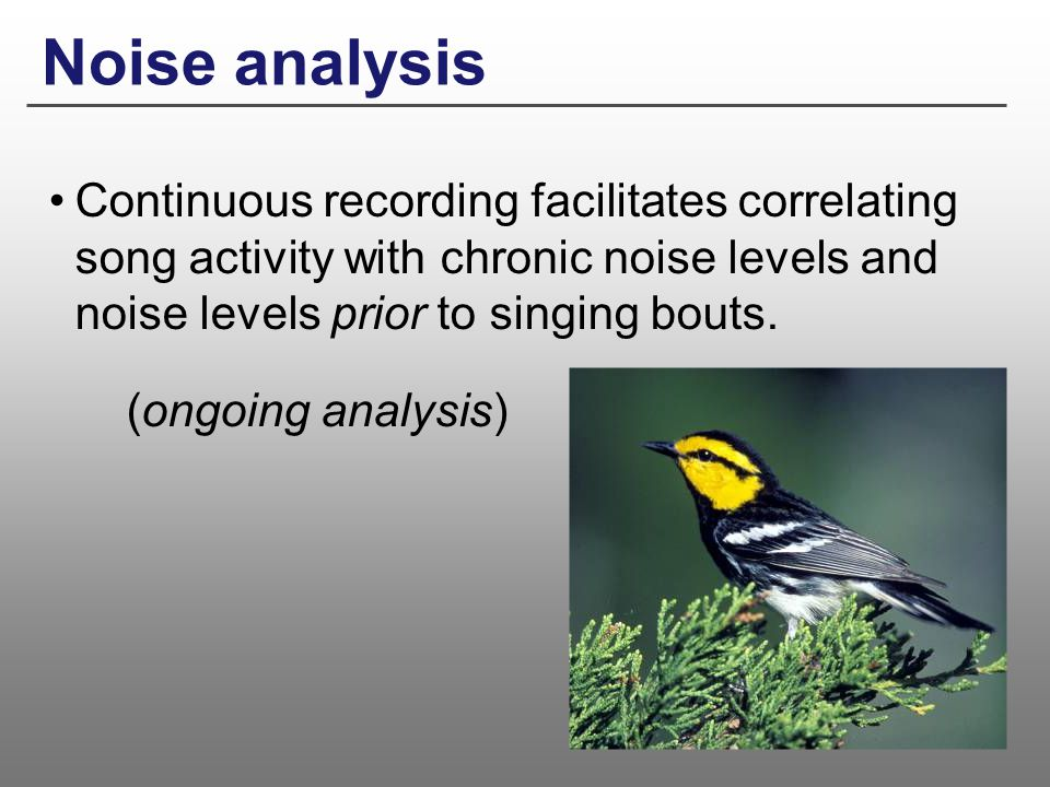 Noise analysis Continuous recording facilitates correlating song activity with chronic noise levels and noise levels prior to singing bouts.