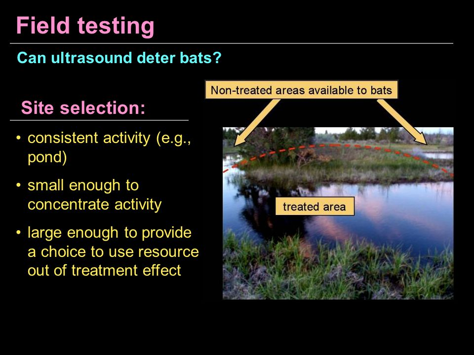 Field testing Site selection: Can ultrasound deter bats