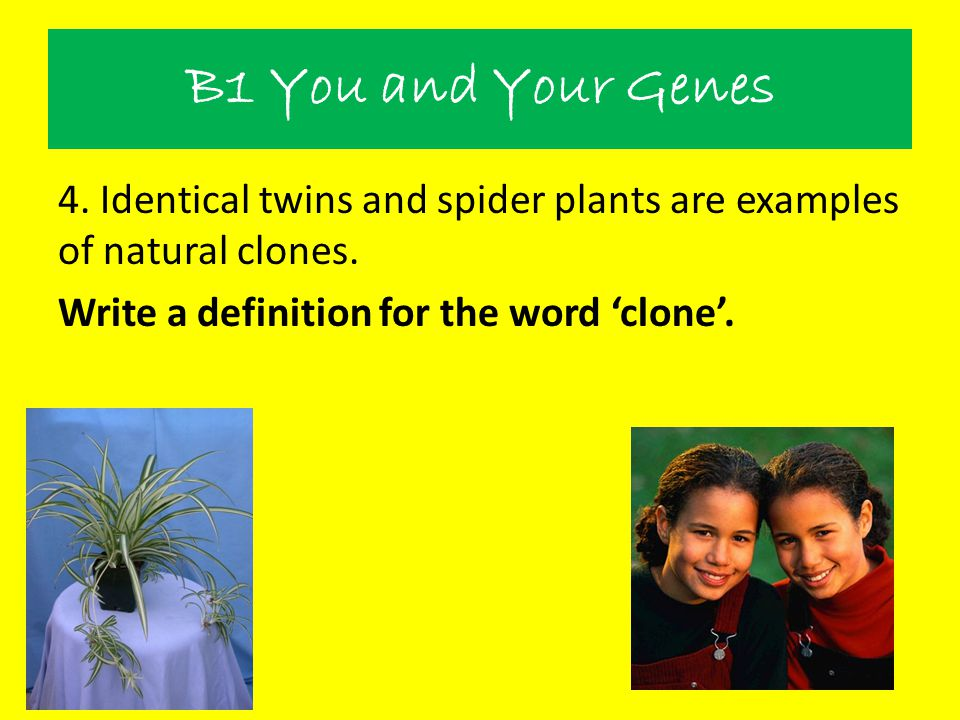 B1 You and Your Genes 4. Identical twins and spider plants are examples of natural clones.