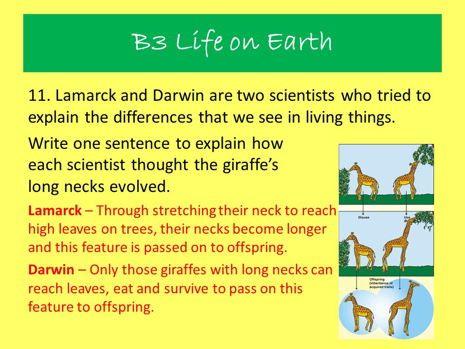 B3 Life on Earth 11. Lamarck and Darwin are two scientists who tried to explain the differences that we see in living things.