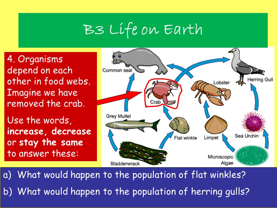 B3 Life on Earth 4. Organisms depend on each other in food webs. Imagine we have removed the crab.