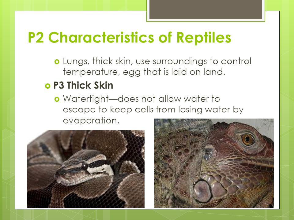P2 Characteristics of Reptiles