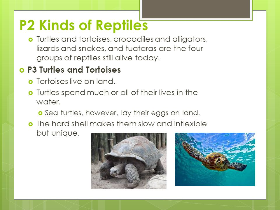 P2 Kinds of Reptiles P3 Turtles and Tortoises