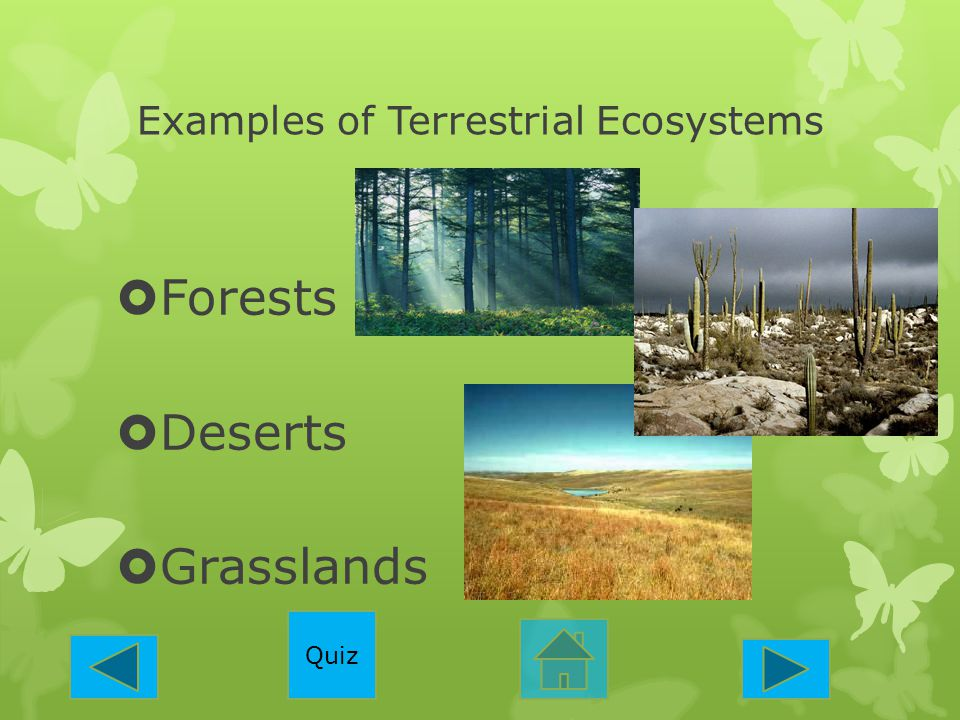 Examples of Terrestrial Ecosystems